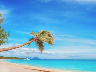 Yachtcharter Karibik Strand mit Palme
