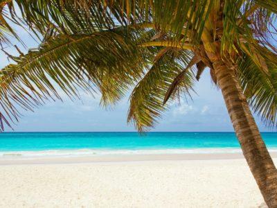 Yachtcharter Karibik Palme am Strand